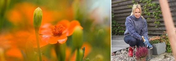 Frisk och färgsprakande höstträdgård